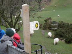 Offa's Dyke Path, markering vlakbij Castell Dinas Bran