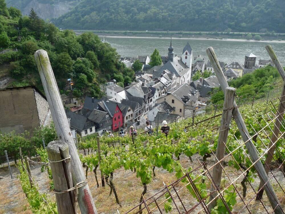 wijngaard bij kaub