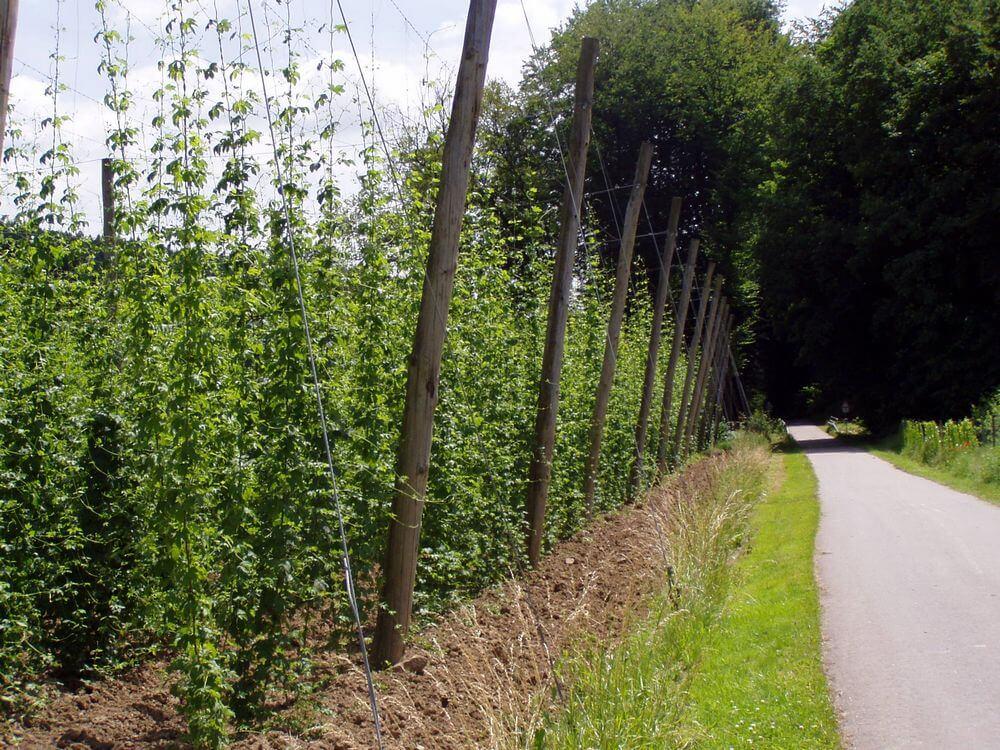 hopplantage